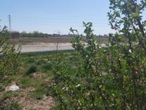 فروش باغچه 600 متر در رباط کریم جاده شهریار در شیپور
