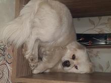 سگ گمشده است  در شیپور
