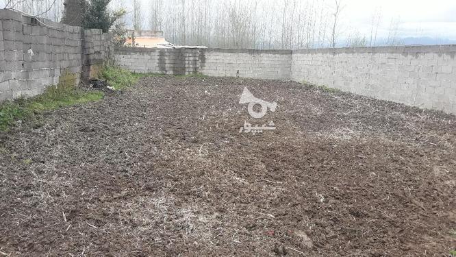 زمین مسکونی 260 متری سند تک برگ روستایی صومعه سرا در گروه خرید و فروش املاک در گیلان در شیپور-عکس1