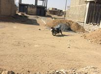 180متری زمین مسکونی در شیپور-عکس کوچک