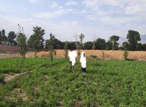 فروش 57قصب زمین شامل70 درخت میوه ویونجه درماهان در شیپور-عکس کوچک