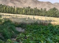 زمین کشاورزی در پیرموسی در شیپور-عکس کوچک