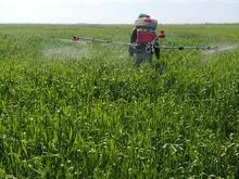 سمپاشی مزارع شما با سمپاش پشتی (میکرونر)  در شیپور