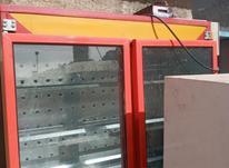 دستگاه جوجه کشی شترمرغ در شیپور-عکس کوچک