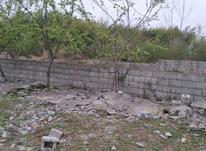 فروش زمین مسکونی 350 متر در رضوانشهر در شیپور-عکس کوچک
