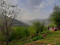 فروش زمین یک هکتاری ویو ابدی در سوادکوه در شیپور