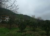 1250متر نوشهر_برند_پای کوه در شیپور-عکس کوچک
