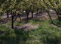 فروش زمین کشاورزی 2360 متر باغ گلابی  روستای شهاب لیلم  در شیپور-عکس کوچک