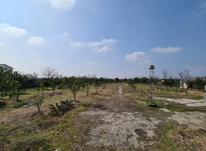 فروش زمین باغی لوکیشن عالی در شیپور-عکس کوچک