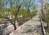 باغ کشاورزی 860 متری  در شیپور-عکس کوچک