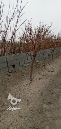 100 متر زمین سنددار _ دفترچه ای منگوله دار در گروه خرید و فروش املاک در تهران در شیپور-عکس1
