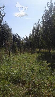 فروش باغ درمیانه در گروه خرید و فروش املاک در آذربایجان شرقی در شیپور-عکس4