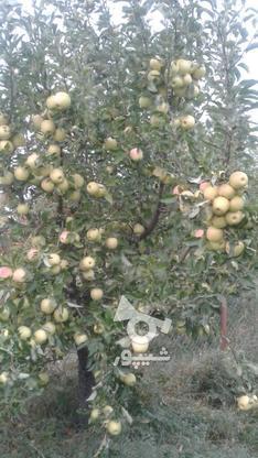 فروش باغ درمیانه در گروه خرید و فروش املاک در آذربایجان شرقی در شیپور-عکس1