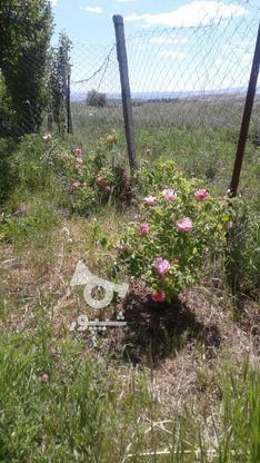 فروش باغ درمیانه در گروه خرید و فروش املاک در آذربایجان شرقی در شیپور-عکس2