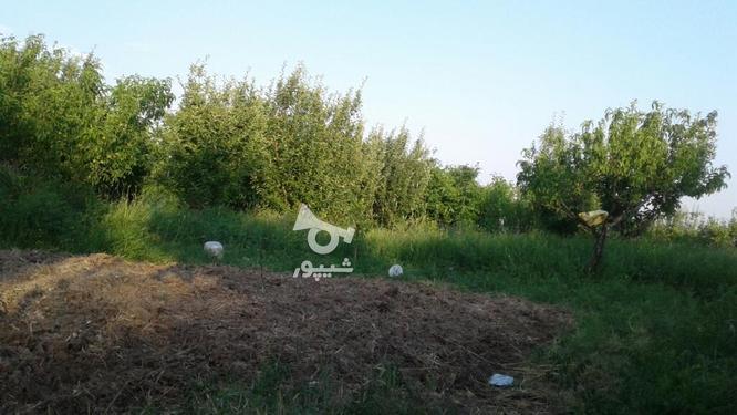 فروش باغ درمیانه در گروه خرید و فروش املاک در آذربایجان شرقی در شیپور-عکس3