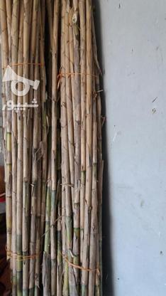 نی هفت بند خام در گروه خرید و فروش خدمات و کسب و کار در مازندران در شیپور-عکس3