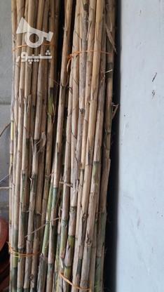 نی هفت بند خام در گروه خرید و فروش خدمات و کسب و کار در مازندران در شیپور-عکس5