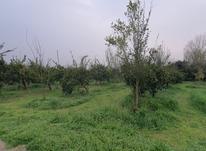 زمین باغی 500 متر در قائم شهر باغدشت در شیپور-عکس کوچک