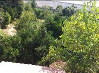 فروش زمین مسکونی 450 متر ماهفروزمحله در شیپور-عکس کوچک