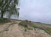 زمین زراعی 424 متری در شیپور-عکس کوچک