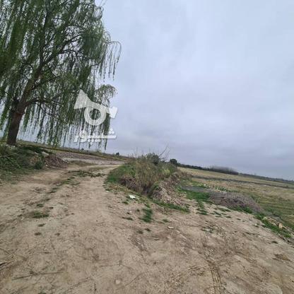 زمین زراعی 424 متری در گروه خرید و فروش املاک در مازندران در شیپور-عکس1