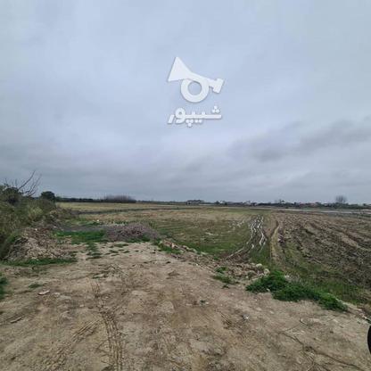 زمین زراعی 424 متری در گروه خرید و فروش املاک در مازندران در شیپور-عکس2