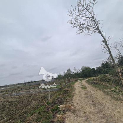 زمین زراعی 424 متری در گروه خرید و فروش املاک در مازندران در شیپور-عکس3