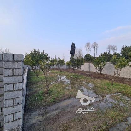 فروش زمین 258 متری مناسب برای سرمایه گذاری در گروه خرید و فروش املاک در مازندران در شیپور-عکس2