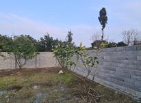 فروش زمین باغی 349 متری مناسب سرمایه گذاری در شیپور-عکس کوچک