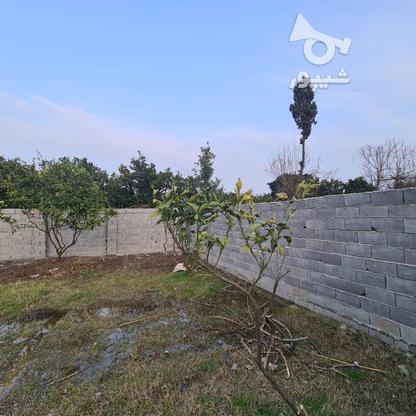 فروش زمین باغی 349 متری مناسب سرمایه گذاری در گروه خرید و فروش املاک در مازندران در شیپور-عکس1