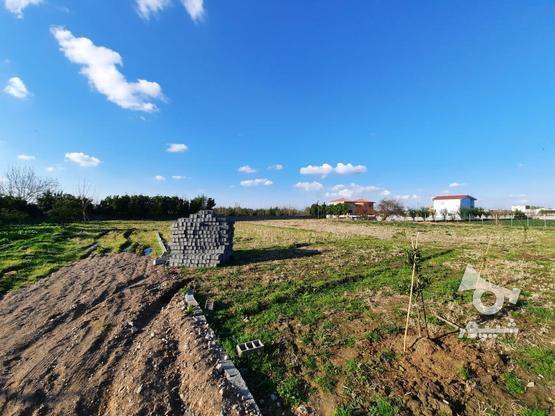 زمین داخل بافت سند دار در گروه خرید و فروش املاک در مازندران در شیپور-عکس2