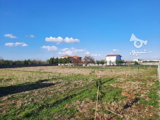 زمین داخل بافت سند دار در گروه خرید و فروش املاک در مازندران در شیپور-عکس1