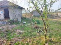 فروش زمین مسکونی 1500 متر در رضوانشهر در شیپور-عکس کوچک
