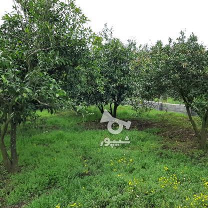 فروش 4000 متر زمین باغ مرکبات کیلومتر5 ساری در گروه خرید و فروش املاک در مازندران در شیپور-عکس7
