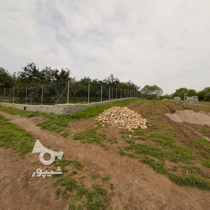 فروش 4000 متر زمین باغ مرکبات کیلومتر5 ساری در گروه خرید و فروش املاک در مازندران در شیپور-عکس13
