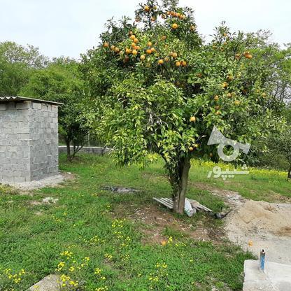 فروش 4000 متر زمین باغ مرکبات کیلومتر5 ساری در گروه خرید و فروش املاک در مازندران در شیپور-عکس3