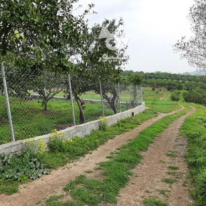فروش 4000 متر زمین باغ مرکبات کیلومتر5 ساری در گروه خرید و فروش املاک در مازندران در شیپور-عکس6