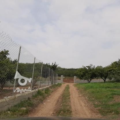 فروش 4000 متر زمین باغ مرکبات کیلومتر5 ساری در گروه خرید و فروش املاک در مازندران در شیپور-عکس12