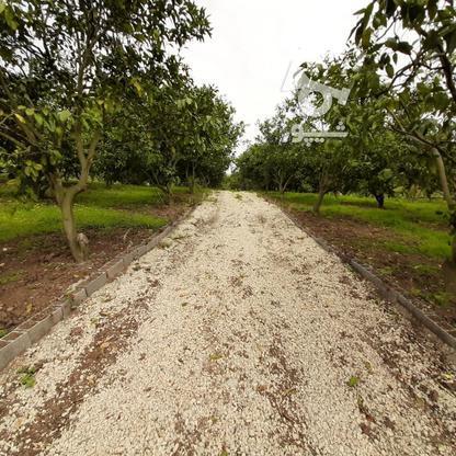 فروش 4000 متر زمین باغ مرکبات کیلومتر5 ساری در گروه خرید و فروش املاک در مازندران در شیپور-عکس11