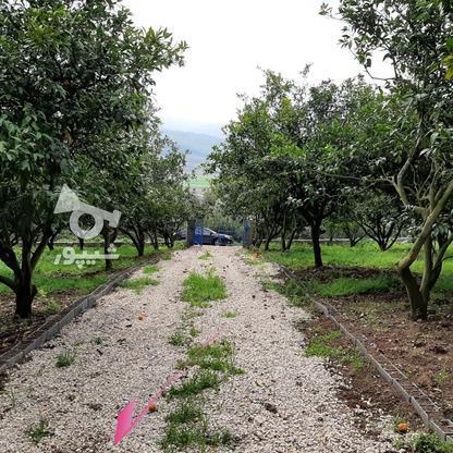 فروش 4000 متر زمین باغ مرکبات کیلومتر5 ساری در گروه خرید و فروش املاک در مازندران در شیپور-عکس2