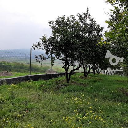 فروش 4000 متر زمین باغ مرکبات کیلومتر5 ساری در گروه خرید و فروش املاک در مازندران در شیپور-عکس9