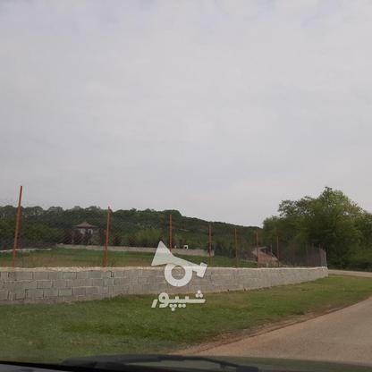 فروش 4000 متر زمین باغ مرکبات کیلومتر5 ساری در گروه خرید و فروش املاک در مازندران در شیپور-عکس8