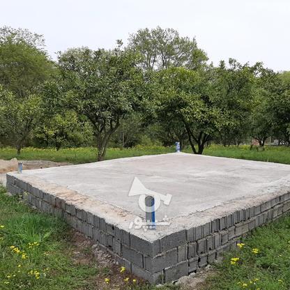 فروش 4000 متر زمین باغ مرکبات کیلومتر5 ساری در گروه خرید و فروش املاک در مازندران در شیپور-عکس4