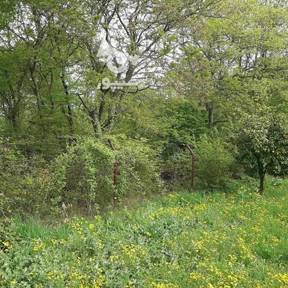 فروش 4000 متر زمین باغ مرکبات کیلومتر5 ساری در گروه خرید و فروش املاک در مازندران در شیپور-عکس10