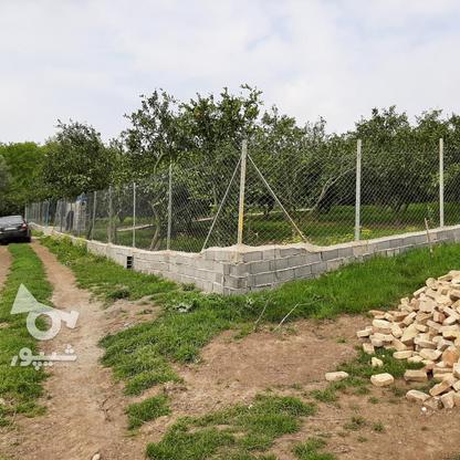 فروش 4000 متر زمین باغ مرکبات کیلومتر5 ساری در گروه خرید و فروش املاک در مازندران در شیپور-عکس5