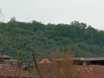 فروش زمین جنگلی مسکونی 260 متر در آمل در شیپور