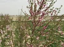 فروش زمین 1200 متر در شهریار در شیپور-عکس کوچک