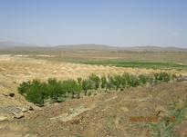 مزرعه ای در30 کیلومتری گلپایگان در شیپور-عکس کوچک