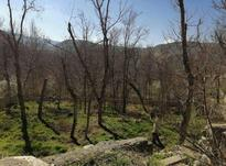 زمین 4700 متر در کردان در شیپور-عکس کوچک
