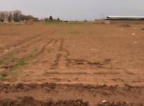 فروش زمین کشاورزی 500 متر در نظرآباد،خسروآباد در شیپور-عکس کوچک